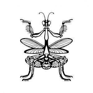 Mantis Silhouette